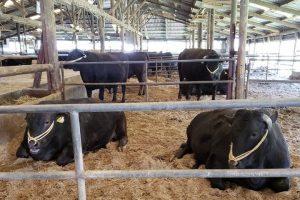 宇佐農場 おおいた和牛